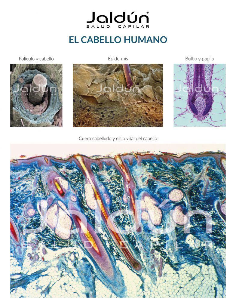 Poster del Cabello Humano